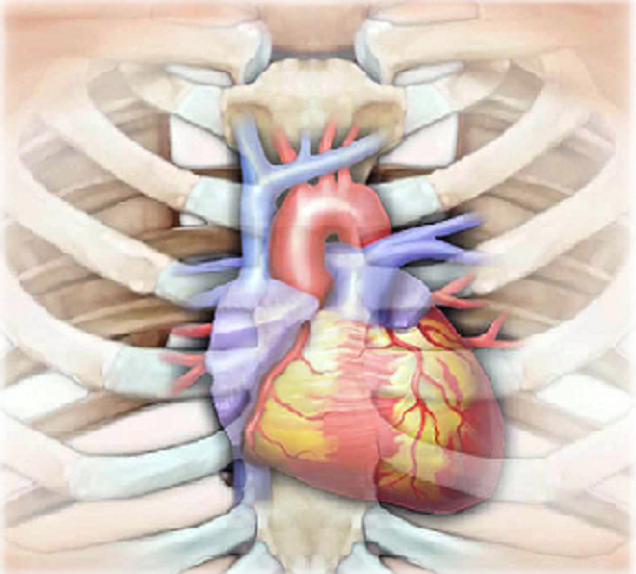 Quality Improvement for Cardiac Surgery | The Patient Guide to Heart ...